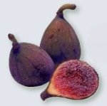 Fresh fig at maturity